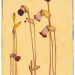 Ray Parkin - Unknown Flower